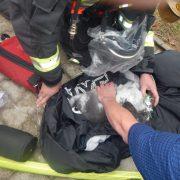 Würgeschlange und Kaninchen bei Kellerbrand gerettet