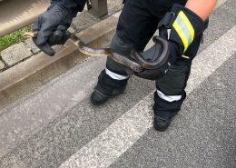 Schlange im Auto - Schreck für Kinder während der Fahrt