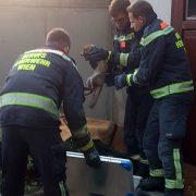 Berufsfeuerwehr Wien retten Fuchs und Hund