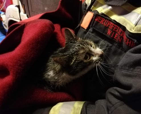 Mann und Katze aus brennender Wohnung gerette