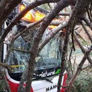 Linienbus kollidiert mit umstürzendem Baum – zwei Verletzte
